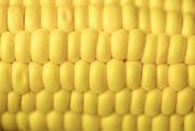 7th Mar 2018 - Yellow - Corn