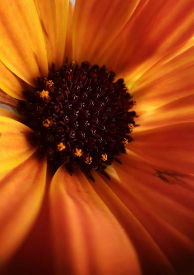 Orange by m2016