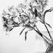 scissor vase by pistache