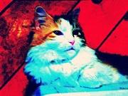 5th Mar 2018 - Princess Rafalita-Her portrait edited