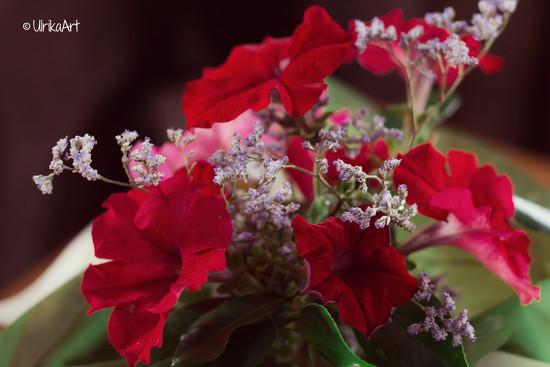 Pretty petunias  by ulla