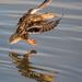 Perfect Landing by stefneyhart