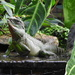 Chinese Water Dragon  by susiemc