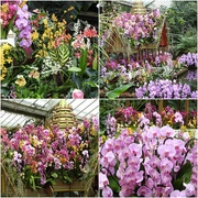 7th Mar 2018 - More Orchids