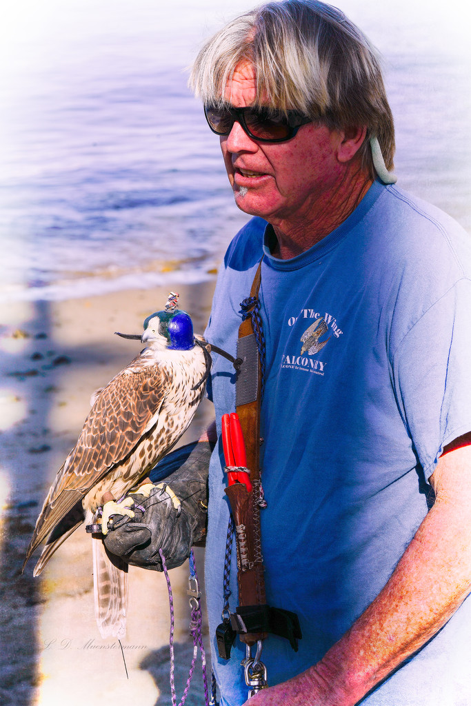 Beach-Front Falconer by Weezilou