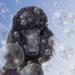 Wash Day Bubbles by salza
