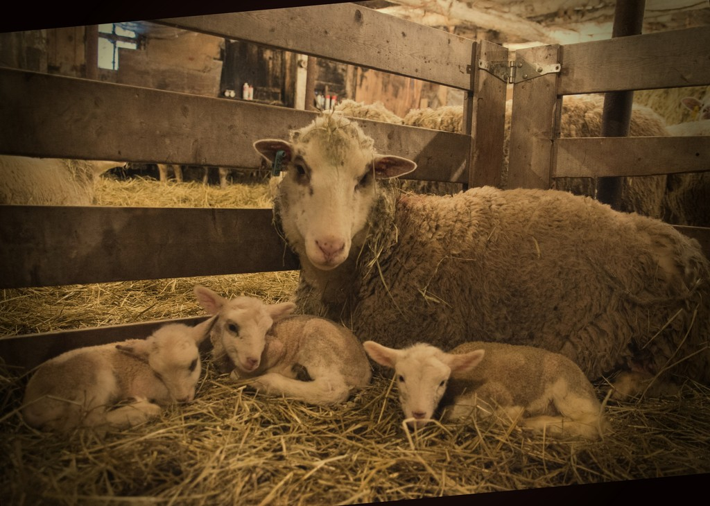 Her First Family Portrait by farmreporter