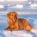 While I was shooting blue ice I met Molly by dridsdale