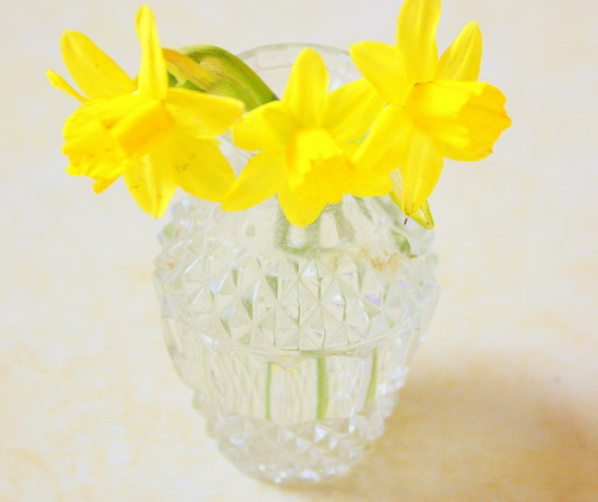 Daffodils are my favorite Spring flowers by bruni