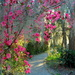 Path with azaleas, Magnolia Gardens, Charleston, SC by congaree