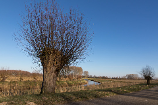 Pollard Willow by the river by leonbuys83
