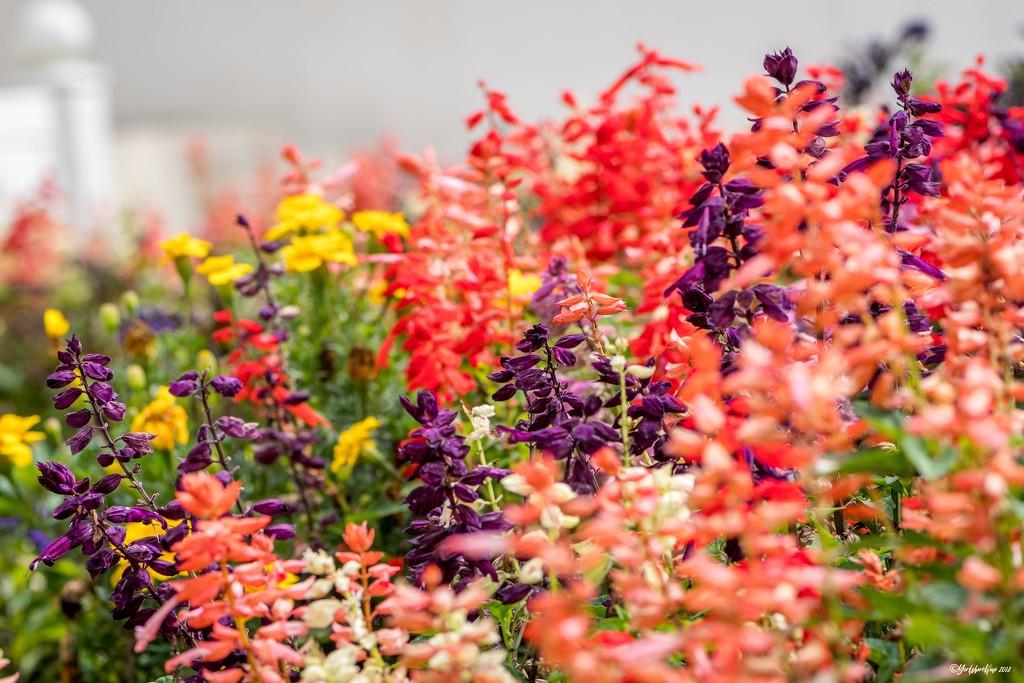 India Garden Colour by yorkshirekiwi