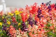 9th Mar 2018 - India Garden Colour