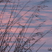 Snow and Grasses