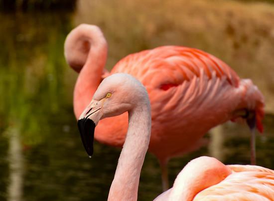 Flamingo Friday '18 08 by stray_shooter