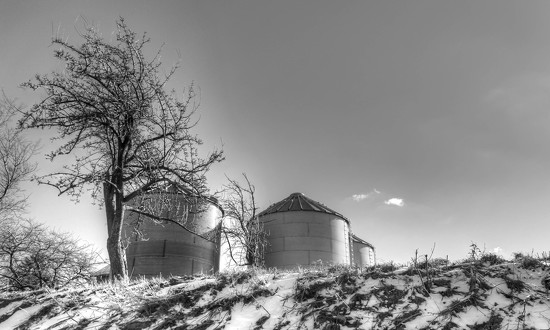 Short silos? by mittens
