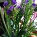 Violet In A Vase