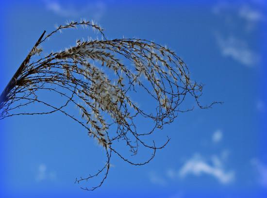 Blue Skies. by wendyfrost