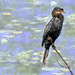Cormorant with a bit of texture.