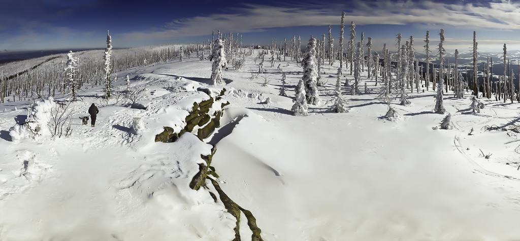Bömerwald in winter by jerome