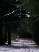 4th Mar 2018 - Forest path