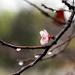March Rains