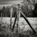 Paimpont 2018: Day 70 - Occasional Fence Post 27 by vignouse