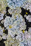 12th Mar 2018 - lichen