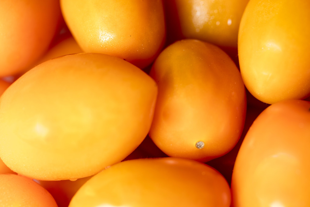 Orange - Orange Tomatoes by nicolecampbell