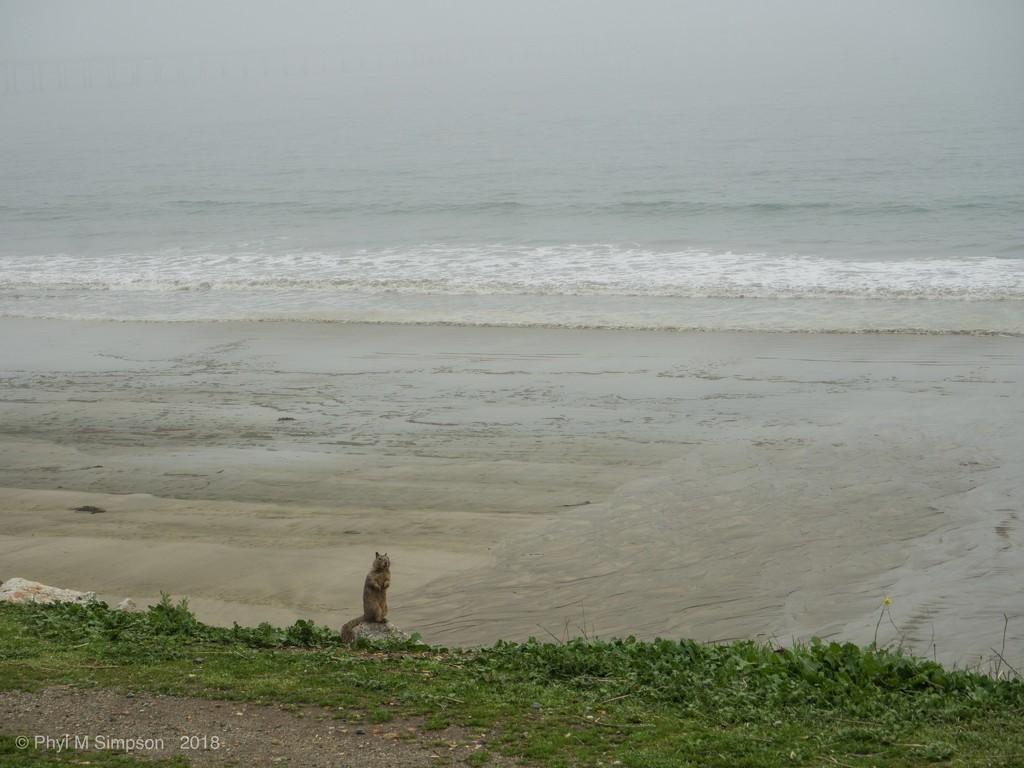 Squirre!  Rainy Beach Day! by elatedpixie