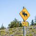 Beware Moose!!