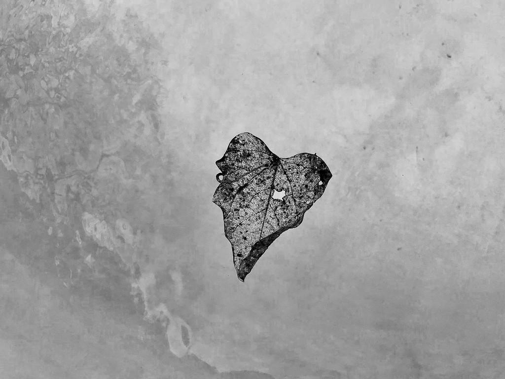 The heart leaf  by louannwarren