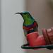 Sunbird by salza