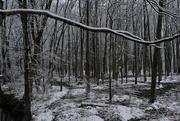 15th Mar 2018 - Snowy Woods