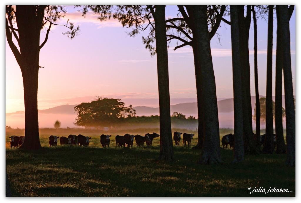 Early Morning Fog ... by julzmaioro