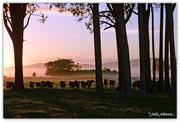 16th Mar 2018 - Early Morning Fog ...