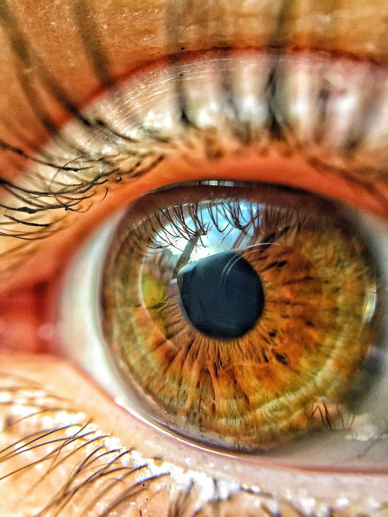 Alix eye's  by cocobella