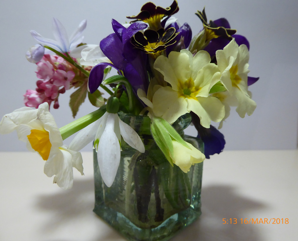Spring flowers from the garden.. by snowy
