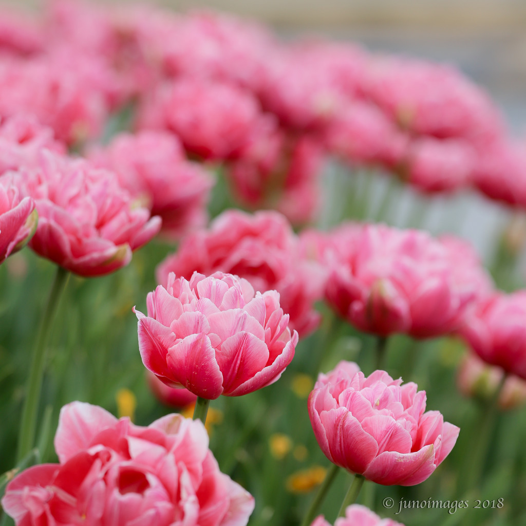 Full Bloom by jnorthington