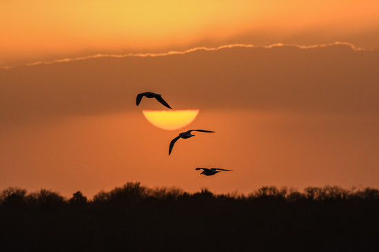 Sunset Trio by kareenking