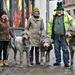 Irish Wolfhound's in The Snow