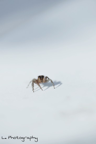 Itty Bitty Spider  by flashster78