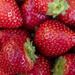 Red - Strawberries