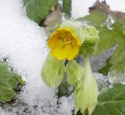 19th Mar 2018 - Snow, snow, go away...