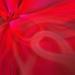 Abstract Bougainvillea by salza