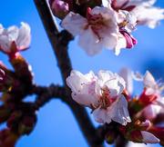 19th Mar 2018 - 19-03 japanese flower