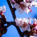 19-03 japanese flower
