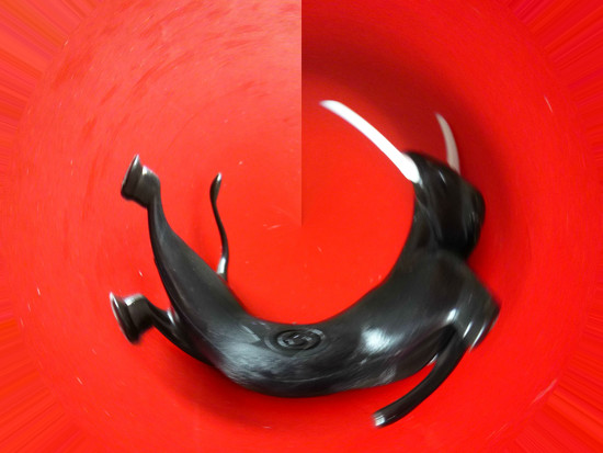 Abstract red bull by 30pics4jackiesdiamond