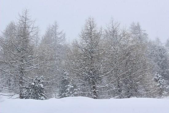 It snows by vincent24