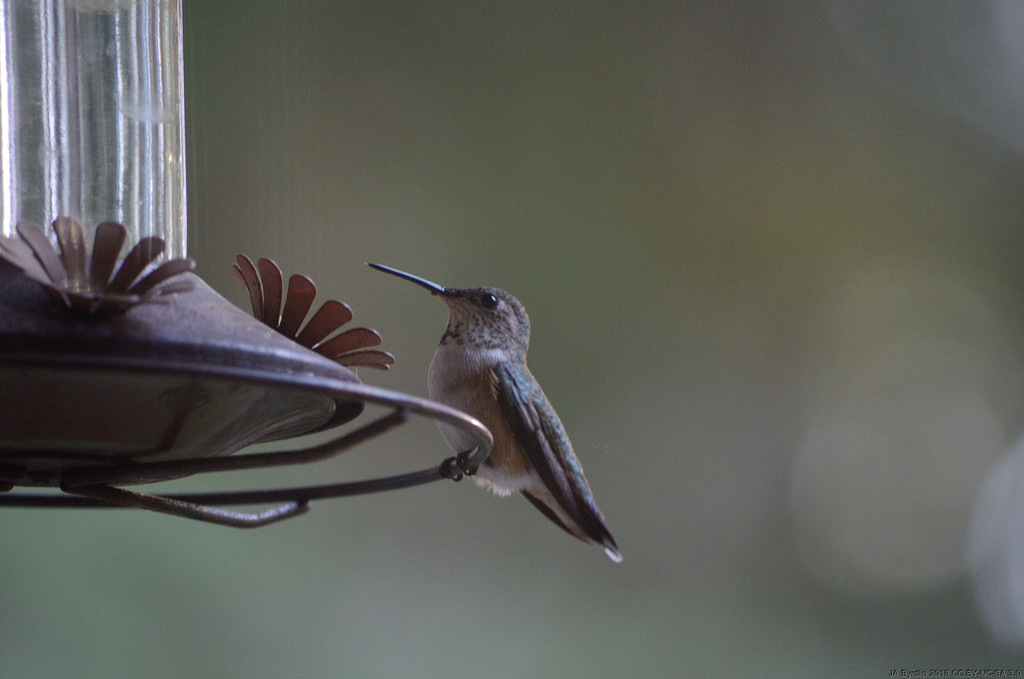 The Coming of Spring - The Hummer by byrdlip